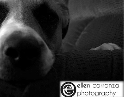 My love for Pets and my Passion Photography