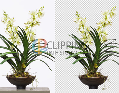 Flower image editing