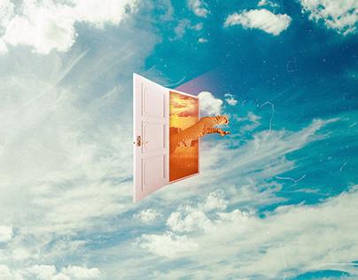 Feline Door