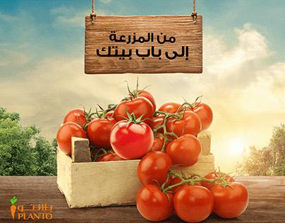 PLANTO | KSA