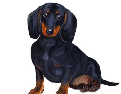 Dog breeds Illustrations