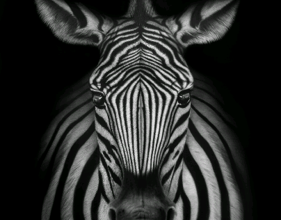 Black Zoo Project #6