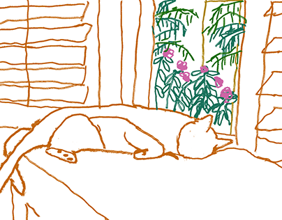 Cat laying by the window in Florida