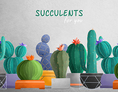 Succulents for You