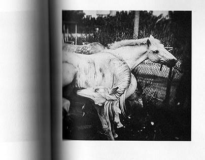corpo um | Miguel Marecos | photobook