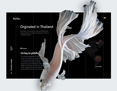 betta fish website design