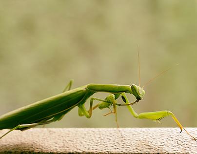 I made this mantis a free photo shoot )))