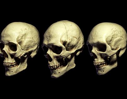 Billelis 3D Skull Models - Human Pack