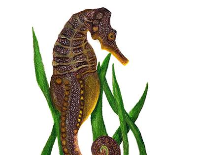 Illustrations for Yo Cuido el Mar