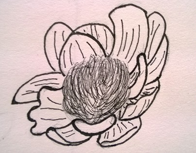 Medieval Botany Plant Sketches