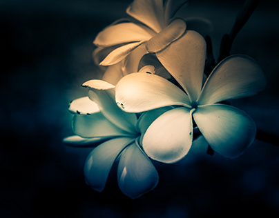 The Art of Flora
