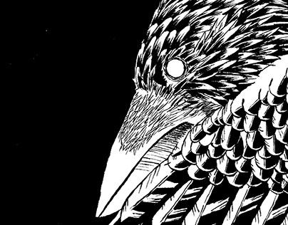 O Corvo Negro na Lápide - Ilustraçao