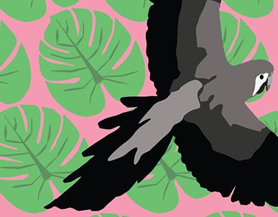 Bird Illustrations & Compositions