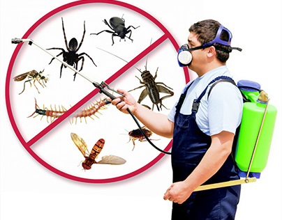 i will personalize video for your pest control company