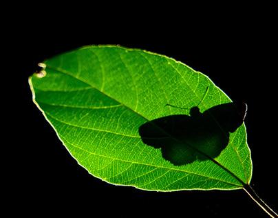 Beauty of Butterflies