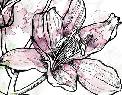 WATERCOLOUR + INK : DAY LILY