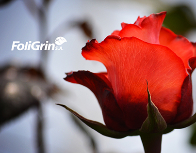 Brand Redesign & Website Design for Foligrin S.A.