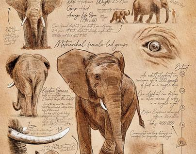 Scientific Illustration: African Elephant