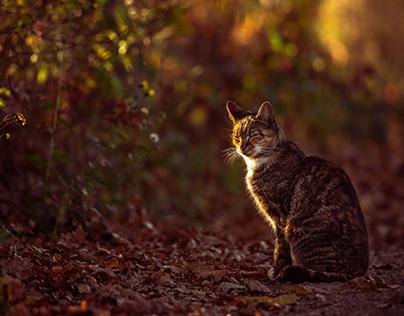 Autumn walk of the cat