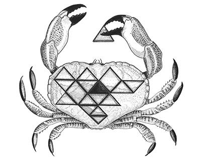 Sea Animals Illustrations