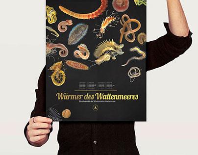 Wunderbare Welt der Würmer des Wattenmeeres