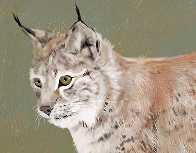 Rovpattedyr [illustrasjon]