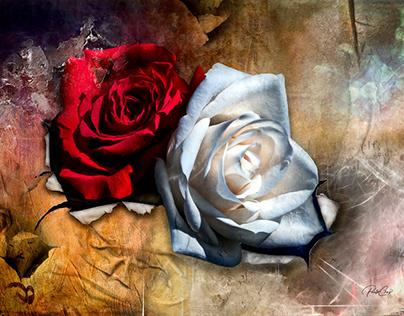 Love & Purity
