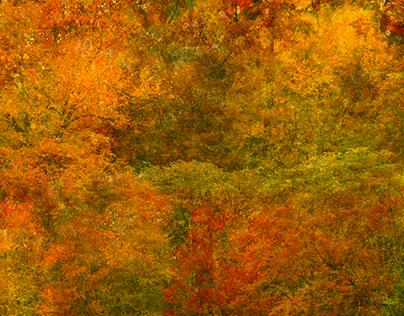 Fall in Full