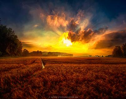 Hot cornfield
