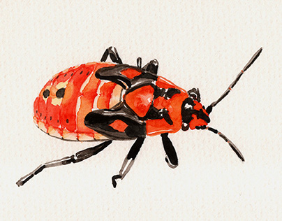 Aquarelle Insects for practice.