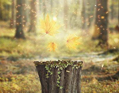 Leaf of tree