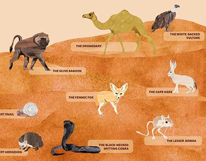 Animals – Sahara Desert