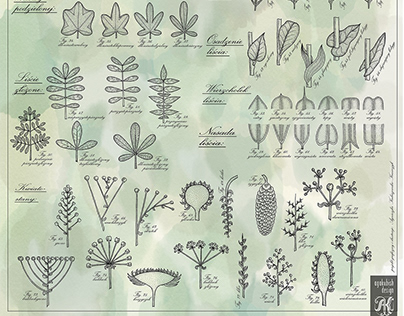 60 botanical engravings
