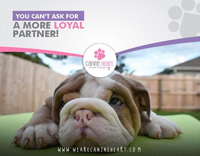Canine Heart on Facebook