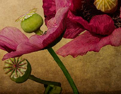 Experimental Photography - Plants