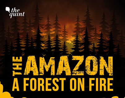 THE AMAZON - A FOREST ON FIRE