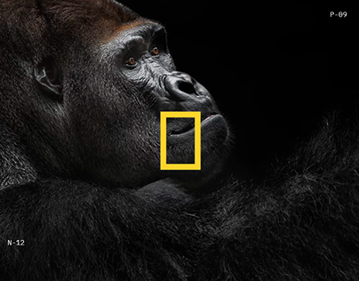 National Geographic World Changing Intuitive Website
