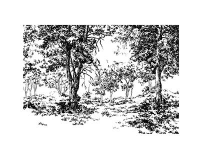 Botanical garden A