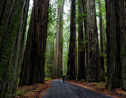 Where to Find California Redwoods