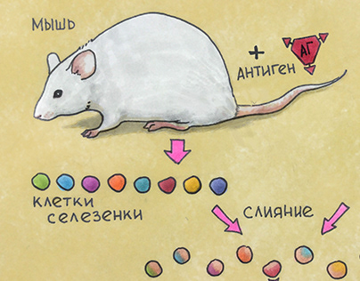 The history of the discovery and use of antibodies