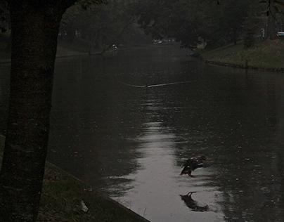 Stark Canals & Alleys (mi Holanda oscura)