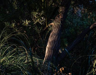 Woods and Wildlife