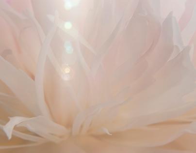 Silky flower
