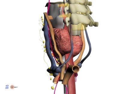 Anatomic 3D works (2008/2009)