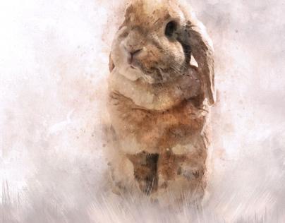 Cute Rabbit Portraits