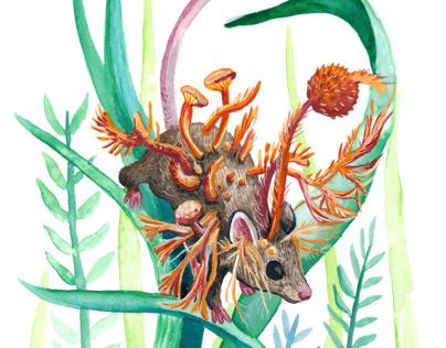 Cordyceps - The Zombie Fungus