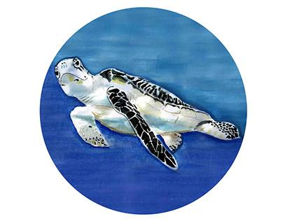 Hawksbill See Turtle