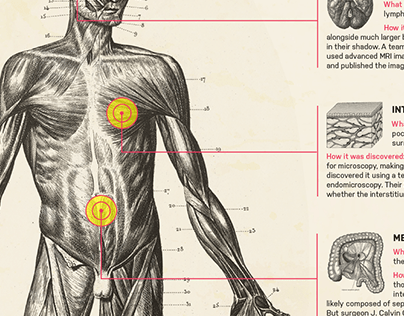 Infographic: The New Anatomy