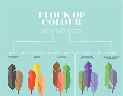 Flock of Colour
