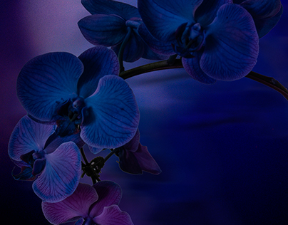 Once in a Blue Orchid